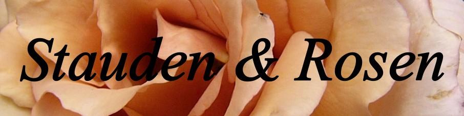 Banner des Stauden&Rosen-Blogs